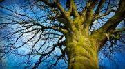 neato tree