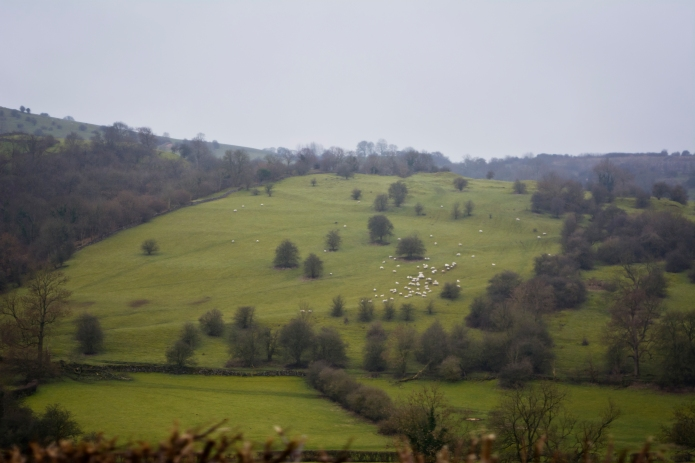 Sheep-dotted hillside