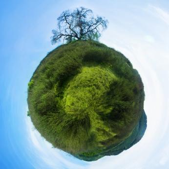 Catherine Nelson inspiration Planet Tree 2