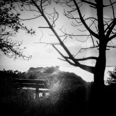 Film Photo 1