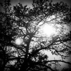 Film Photo 15