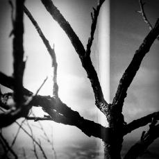 Film Photo 3