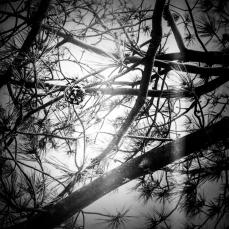 Film Photo 5