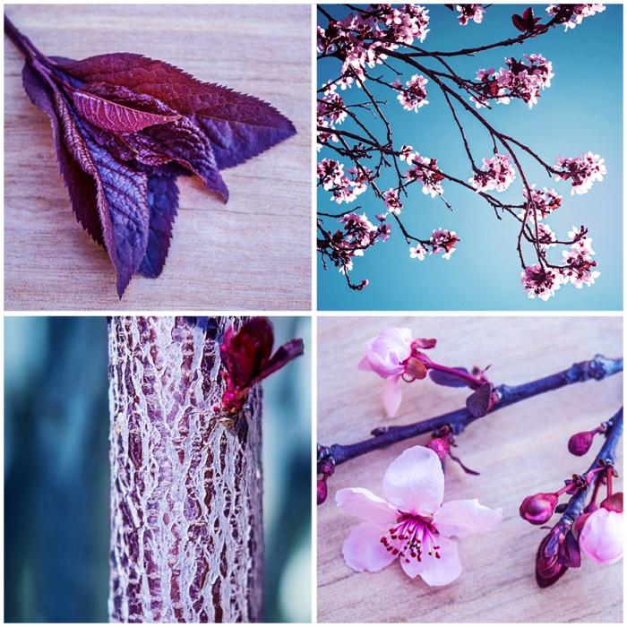Plum Tree Blog Image