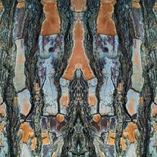 Symmetrical Bark Textures 1