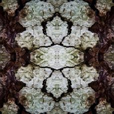 Symmetrical Bark Textures 2