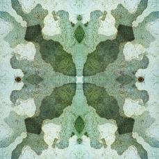 Symmetrical Bark Textures 3