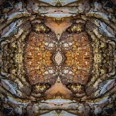 Symmetrical Bark Textures 4