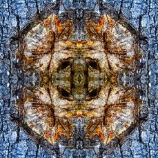 Symmetrical Bark Textures 5