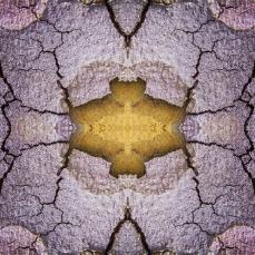 Symmetrical Bark Textures 6