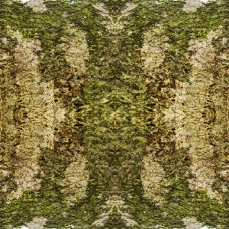Symmetrical Bark Textures 7