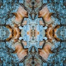 Symmetrical Bark Textures 8