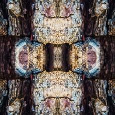 Symmetrical Bark Textures 9