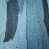 Tree Leaves Bark Etc _ 0009b