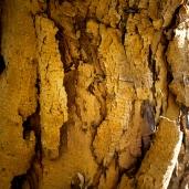 Tree Leaves Bark Etc _ 0011b