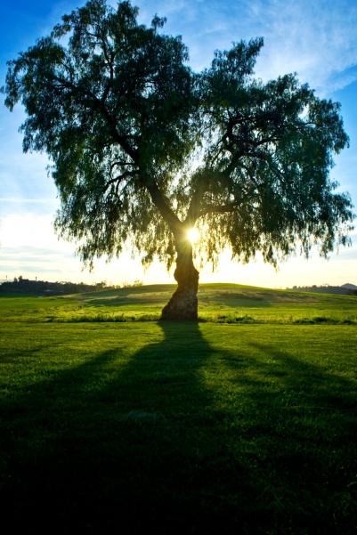 Tree Mag 2
