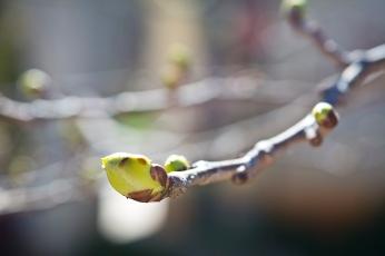 tree mag 5