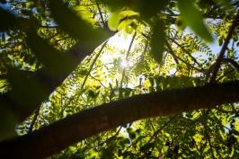 Tree Mag 8